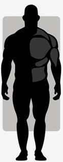 انواع تیپ های (ژنتیک) بدنی در بدنسازی