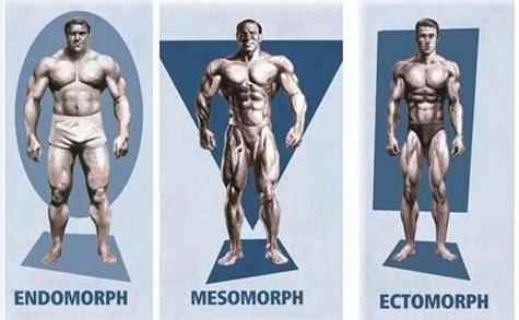 برنامه غذایی و تمرینی برای انواع مختلف تیپ های بدنی در بدنسازی
